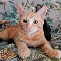 Adopt A Pet :: Kona - Ventura, CA