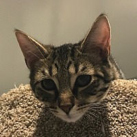 Adopt A Pet :: Bushwick - Lafayette, NJ