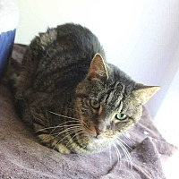Adopt A Pet :: Timmy - Central Islip, NY
