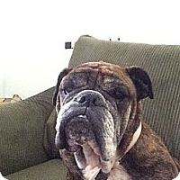 Adopt A Pet :: Bella Ann - Cibolo, TX