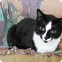Adopt A Pet :: Clarke - Orlando, FL