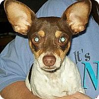 Adopt A Pet :: Mojo - Winchester, CA