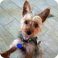 Adopt A Pet :: Bodie - Ocala, FL