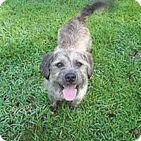 Adopt A Pet :: Benji - Lyme, CT