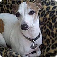Adopt A Pet :: Simon-Adoption Pending - Costa Mesa, CA