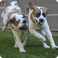 Adopt A Pet :: LUKE Skywalker & Princess LEIA - Glendale, AZ