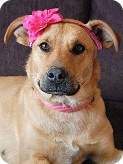 Shepherd (Unknown Type)/Labrador Retriever Mix Dog for adoption in Huntsville, Alabama - Chloe