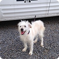 Adopt A Pet :: Winnie - Bridgewater, NJ