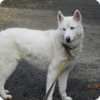 Adopt A Pet :: Ghost - Tillamook, OR