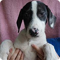 Adopt A Pet :: Dudley - Oviedo, FL