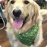 Adopt A Pet :: Tucker - Lutherville, MD