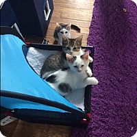 Adopt A Pet :: Piper & Pickle - Harrison, NY