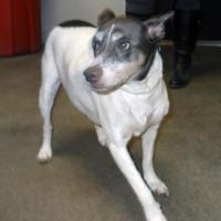 Adopt A Pet :: Sadie - Terre Haute, IN