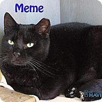 Adopt A Pet :: Meme - Fairhope, AL
