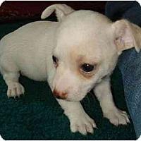 Adopt A Pet :: Penelope - Fowler, CA