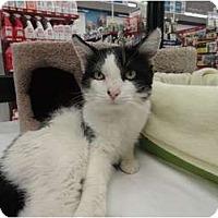 Adopt A Pet :: Thomas - Phoenix, AZ