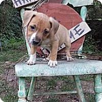 Adopt A Pet :: Francine - Roaring Spring, PA