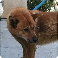 Adopt A Pet :: Sandy - Southern California, CA