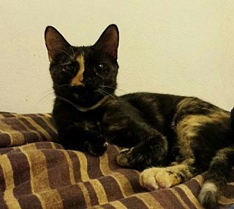 Domestic Mediumhair Cat for adoption in St. Cloud, Florida - Fiona & Felicity