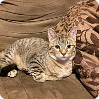 Adopt A Pet :: Laurel - St. Louis, MO
