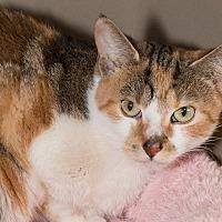 Adopt A Pet :: Noah - Elmwood Park, NJ