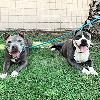 Adopt A Pet :: Janice and Hendrix - Santa Monica, CA
