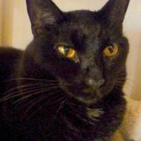 Adopt A Pet :: Bobo - Westville, IN