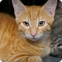 Adopt A Pet :: Rufus - Alameda, CA
