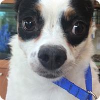 Adopt A Pet :: Goofy - Oak Ridge, NJ