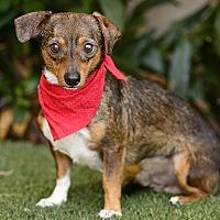 Adopt A Pet :: Tic-Tac - Rancho Palos Verdes, CA