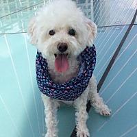 Adopt A Pet :: Mollie - Richmond, BC