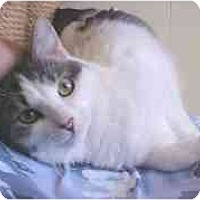 Adopt A Pet :: Tammy - Lunenburg, MA