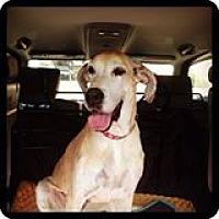 Adopt A Pet :: Cami - Phoenix, AZ