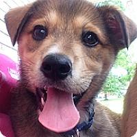 Adopt A Pet :: Berkley - Somers, CT