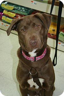 Labrador Retriever Mix Dog for adoption in Grand Rapids, Michigan - Gem