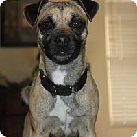 Adopt A Pet :: Egg - Scottsdale, AZ