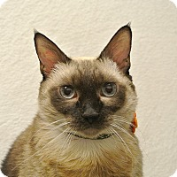 Adopt A Pet :: Vienna - Foothill Ranch, CA