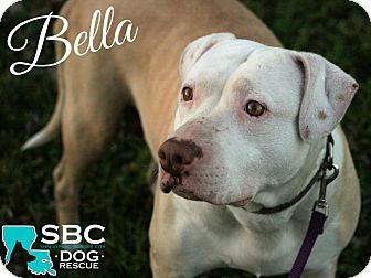 Pit Bull Terrier Mix Dog for adoption in Benton, Louisiana - Bella