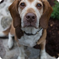 Adopt A Pet :: Dudley - Drumbo, ON