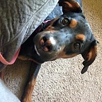 Adopt A Pet :: Pepper - Garwood, NJ