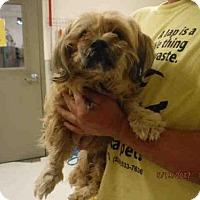 Adopt A Pet :: A573958 - Oroville, CA