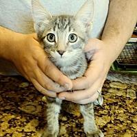 Adopt A Pet :: Sneezy - San Tan Valley, AZ
