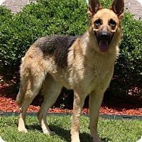 Adopt A Pet :: Glow - Little Rock, AR