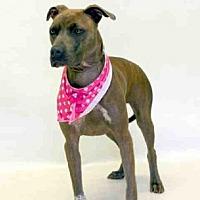 Adopt A Pet :: TWISTER - Sanford, FL