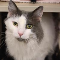 Adopt A Pet :: Misty - Sedona, AZ
