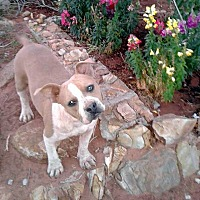Adopt A Pet :: LIZZY - Hurricane, UT