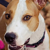 Adopt A Pet :: Trixie Star - San Juan Capistrano, CA