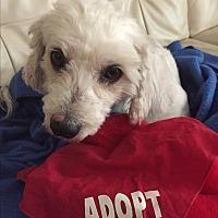 Adopt A Pet :: Ellie-WATCH MY VIDEO!!! - Irvine, CA