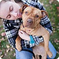 Adopt A Pet :: Jam - Reisterstown, MD