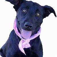 Adopt A Pet :: Hollie of best temperament - Sacramento, CA